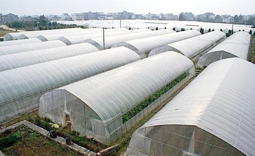 智能温室大棚一站式解决方案